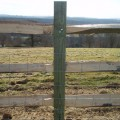 Softwood Post and Chestnut 3 Rail