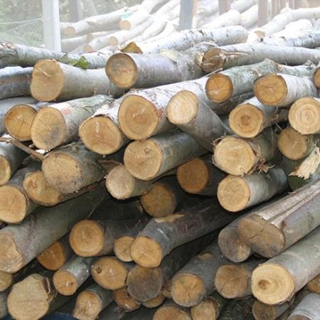 chestnut-fencing-pergola-poles
