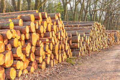 logs FSC