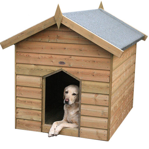 Dog Kennel Video